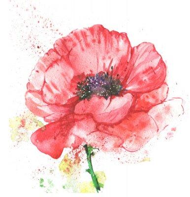Obraz красный цветок, мак, иллюстрация акварелью