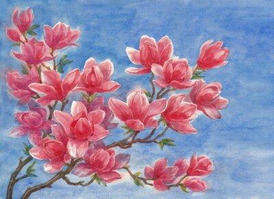 Obraz Акварель, цветущая магнолия.