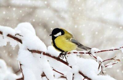 Obraz Синица зимой.