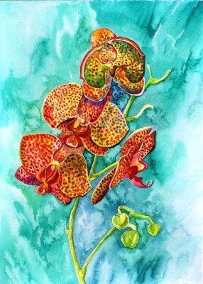 Obraz орхидея рыжая