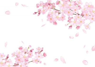 Obraz 春の花:さくらと散る花びらのフレーム 水彩イラストのトレースベクター