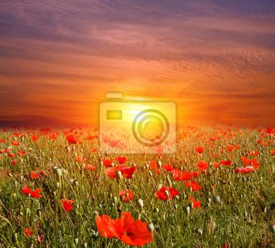 zachód słońca na łące kwiatów