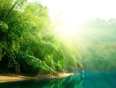 Obraz Zachód słońca w dżungli Tajlandii