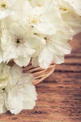 Obraz Zamknij się biały kwitnienia wiśni w koszu w stylu vintage