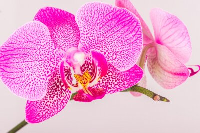 Obraz Zamknij się kwiat orchidei