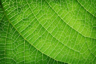 Obraz Zbliżenie na zielony liść