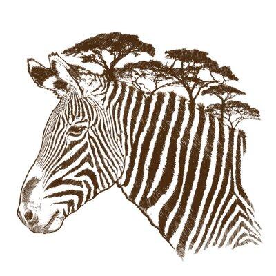 Obraz Zebra z drzewa