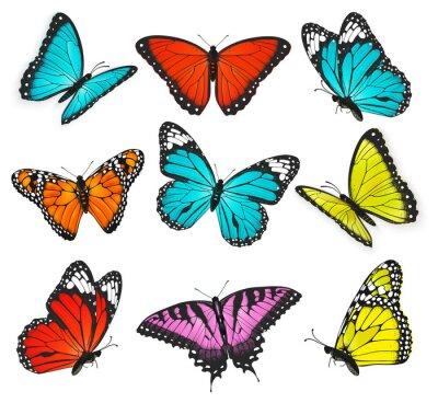 Obraz Zestaw ilustracji realistyczne kolorowe motyle