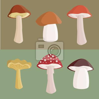 Obraz Zestaw różnych grzybów