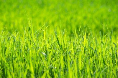 Obraz Zielona trawa