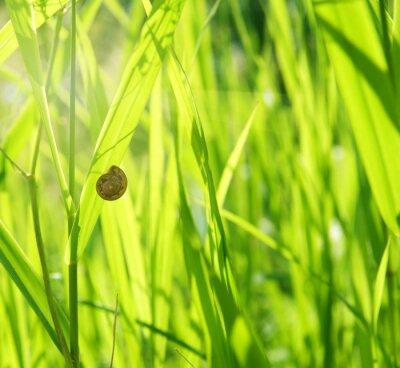 Obraz zielona trawa i ślimak