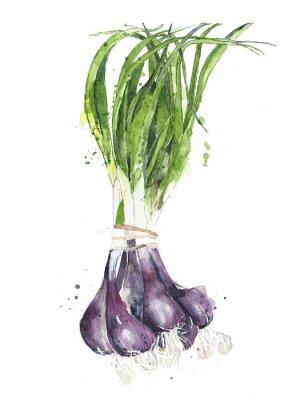 Zielone cebule scallions warzyw akwarela ilustracji samodzielnie na białym tle