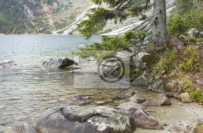 zielone gałęzie sosny nad jeziorem