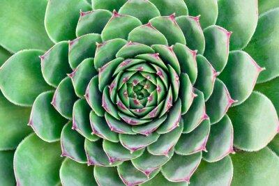 Obraz zielony kwiat