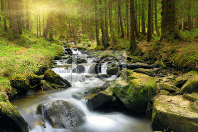 Zielony las w czasie wiosny