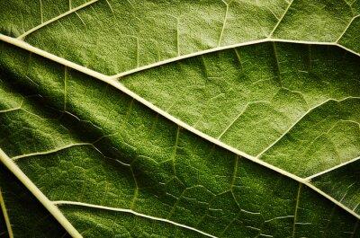 Obraz Zielony liść