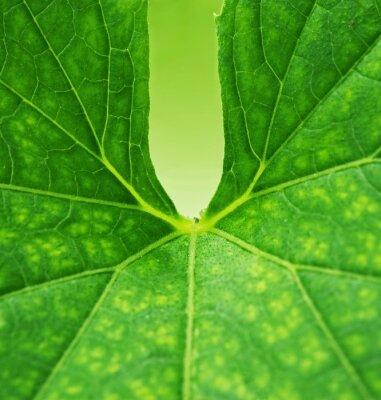 Obraz Zielony liść w tle
