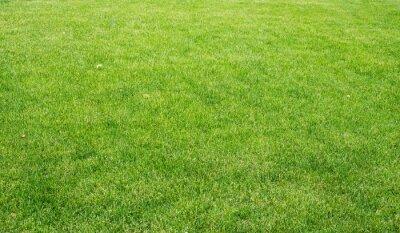 Obraz Zielony trawnik