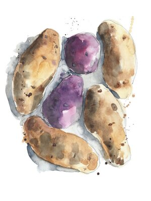 Ziemniaki czerwony żółty rusett ziemniaki warzywa akwarela ilustracji samodzielnie na białym tle
