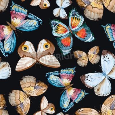 Obraz zilustrowane motyle akwarelowe