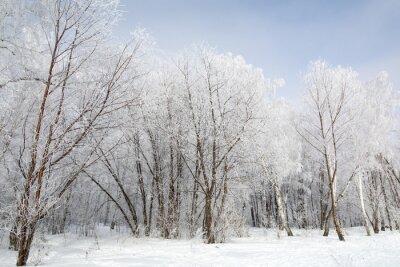 Obraz zimowy las