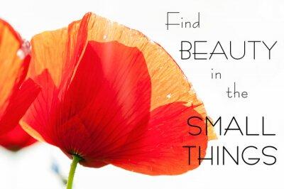Obraz Znajdź piękno w małych rzeczach. Motywacja inspirujący cytat