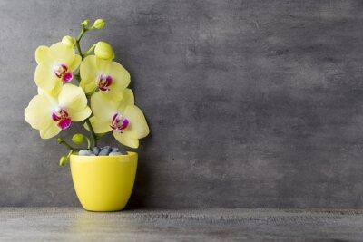 Obraz Żółta orchidea na szarym tle.