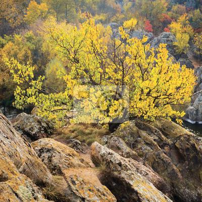 żółte drzewo w czasie upadku między skałami