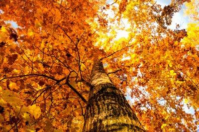 Obraz żółty liść