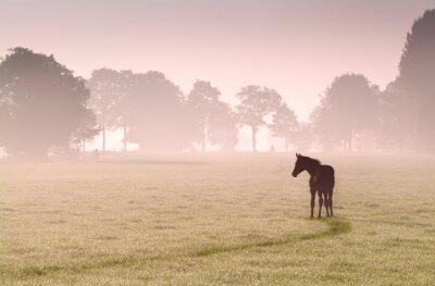 Obraz źrebię na pastwisku sylwetka w mgle