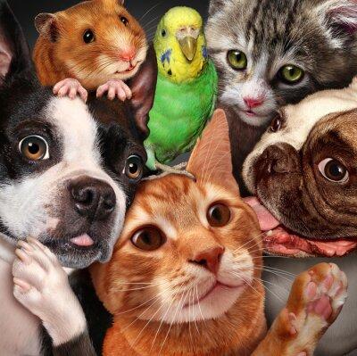 Obraz Zwierzęta Grupa