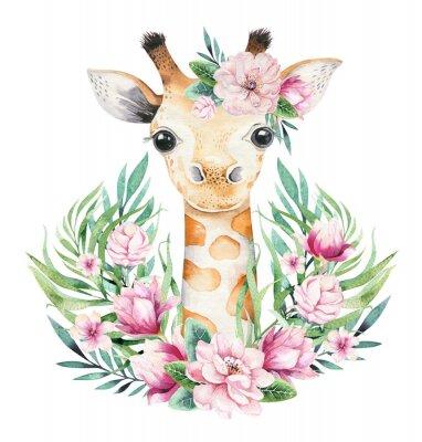 Plakat A poster with a baby giraffe. Watercolor cartoon giraffetropical animal illustration. Jungle exotic summer print.