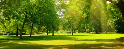 Plakat A summer park with extensive lawns. Wide photo.