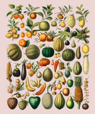 Plakat A vintage illustration of a wide variety of fruits and vegetables from the book, Nouveau Larousse Illustre (1898), by Larousse, Pierre, Augé and Claude, Digitally enhanced by rawpixel.