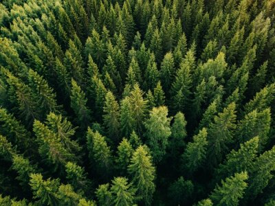 Plakat Aerial top view of summer green trees in forest in rural Finland.