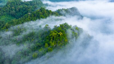 Plakat Aerial view of morning mist at tropical rainforest mountain, background of forest and mist, Aerial top view background forest.