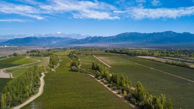 Aerial view of vineyardes in Mendoza, Argentina, during the harvesting season