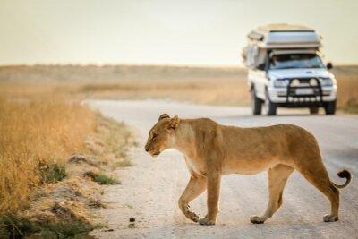 Plakat African safari