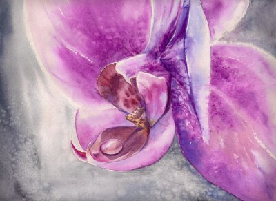 Plakat Akwarela dysząc różowy kwiat orchidei z małych kropli wody.