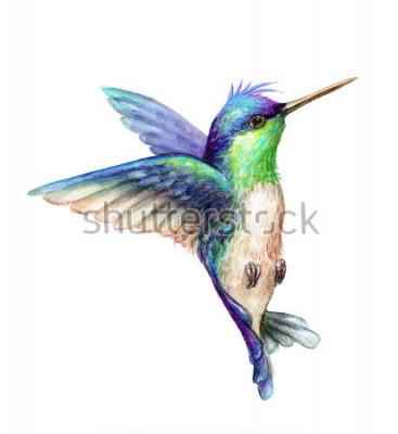 Plakat akwarela ilustracja, latający koliber na białym tle, kliparty egzotyczne, tropikalne, dzikie życie