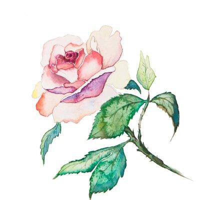 Plakat akwarele wiosennych kwiatów samodzielnie na białym tle
