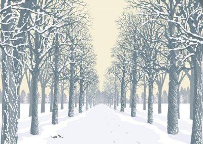 Plakat Aleja z ośnieżonych drzew sylwetki w parku