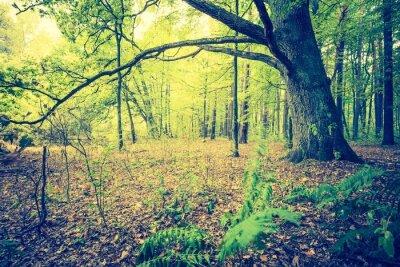 Plakat Archiwalne zdjęcie jesienny krajobraz lasu