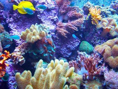 Plakat Barriera Corallina 2