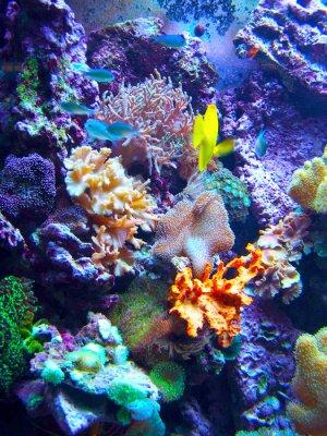 Plakat Barriera Corallina