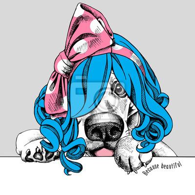 Basset Hound portret w niebieskim żeńskiej Wig z różową opaską. ilustracji wektorowych.