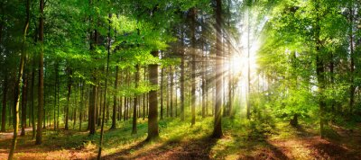 Plakat Beautiful rays of sunlight in a green forest