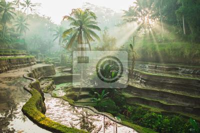 Plakat Beautiful sunrise over famous balinese landmark Tegalalang rice terraces. Magic sun rays, amazing light. Welcome to Bali travel concept.