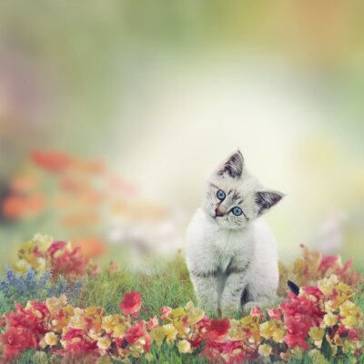 Plakat Biały kociak w Kwiaty