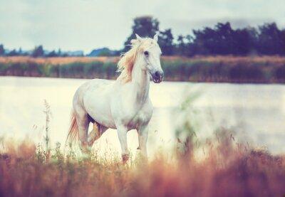 Plakat biały koń działa na brzegu jeziora